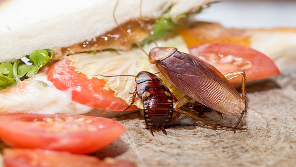 Dead cockroach, The problem in the house because of cockroaches